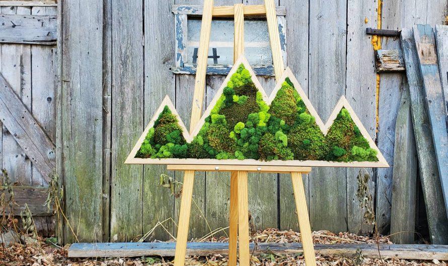 Comment créer un cadre végétal